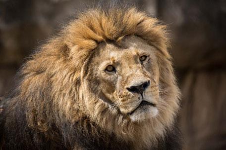 Tiere und Natur, Tiere, Tierportraits, Wildlife