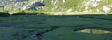 Plateau de pozzines.