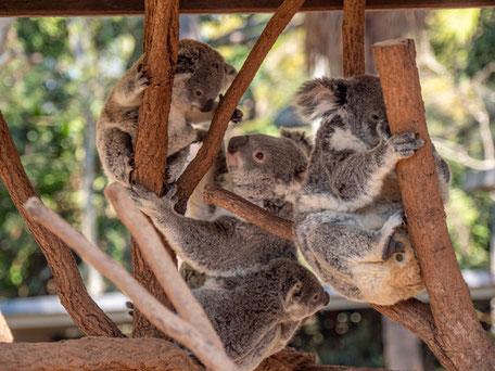 Aktivitäten in Australien