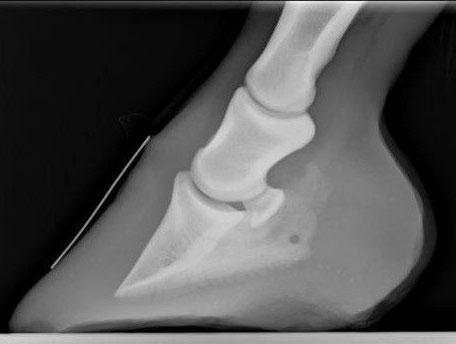 Kolik beim Pferd - Erste Hilfe für deinen Liebling