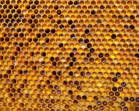 Bild Wabe mit verschieden farbigen Pollen, Vielfalt
