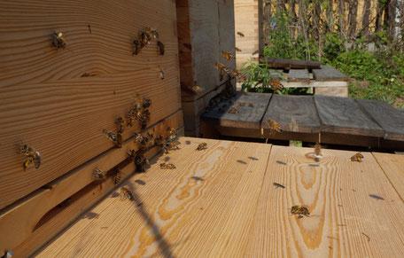 Bild Flugbrett einer Beute mit Bienen
