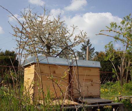 Bild Garten mit Bienenbeuten