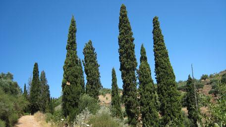 Weg im Landesinneren, Zypressenbäume, Griechenland, Geführte Wanderung 2 nach Livadakia.