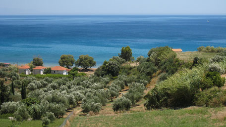 Sicht aufs dunkelblaue Meer, im Vordergrund Olivenbäume und griechische Häuser, Koroni, Zaga Strand. Begleiteter Spaziergang im Landesinnern bei Koroni Griechenland. Etwa 4 km, etwa eine Stunde.
