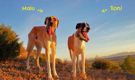 Urlaub mit Hund, Camping mit Hund, Reisen mit Hund