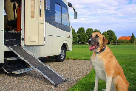 Kleinmetall Hunderampe, Camping mit Hund, Urlaub mit Hund