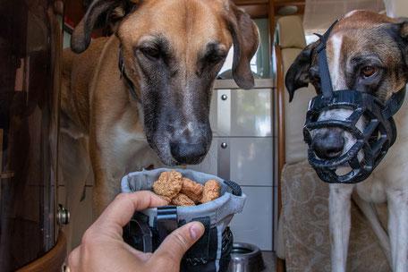 Hundeleckerlies, Hundetraining