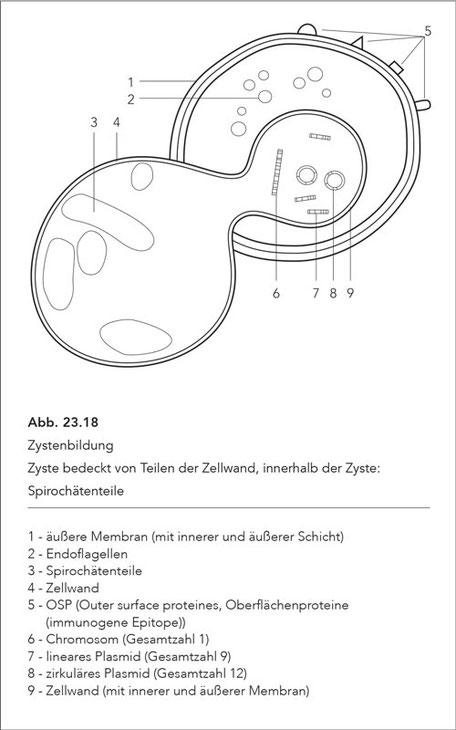 Abb. 23.18