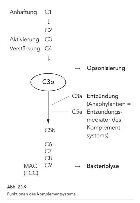 Abb. 23.9