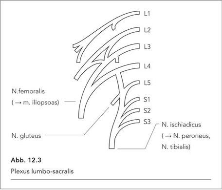 Abb. 12.3