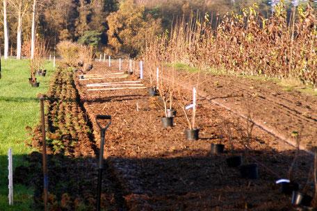 November 2016: Weitere Büsche und Bäume werden gepflanzt.