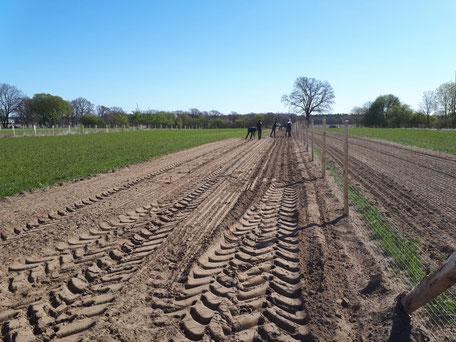 April 2020: Wir erweitern den Hühnerwald um vier Hektar!
