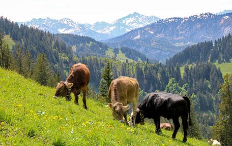 Mittelalpe Oberallgäu Allgäuer Alpgenuss Alpe