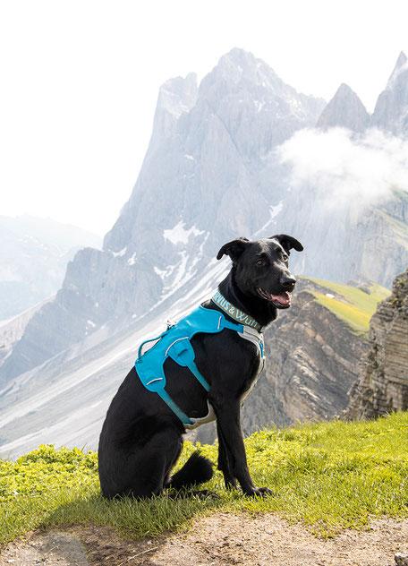 Seceda Wandern in Südtirol Grödnertal Bergurlaub mit Hund