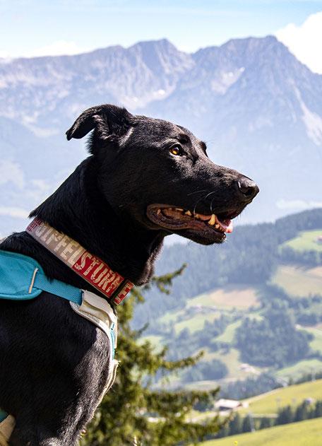 Wandern mit Hund, Urlaub mit Hund, Reisen mit Hund, Bergurlaub mit Hund, Hohe Salve