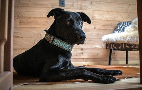 Luxuschalets Tirol LASOA Tannheimer Tal Bergurlaub mit Hund Urlaub mit Hund Urlaub in Österreich Urlaub in Tirol
