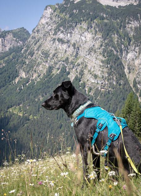 Zwölferkopf, Achensee, Wandern mit Hund, Urlaub mit Hund, Wandern in Tirol, Bergurlaub mit Hund