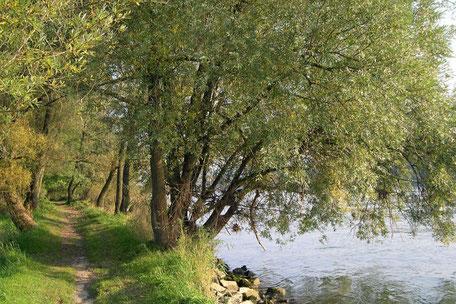 Donaupfad am Donau-Panoramaweg