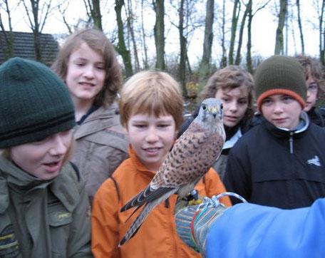 Waldpädagogik: Der Falkner zu Besuch bei den Schülern der Klassen 6