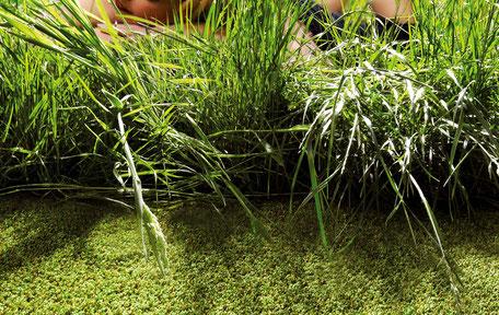 Teppichboden Auslegeware grün Natur Büschking