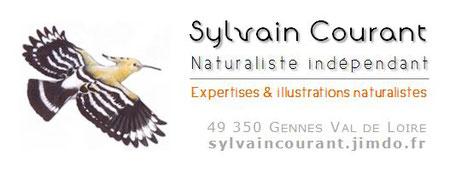logo Sylvain Courant