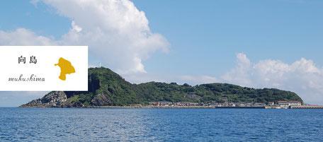 からつ七つの島 島留学 向島 むくしま