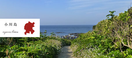 からつ七つの島 島留学 小川島 おがわしま