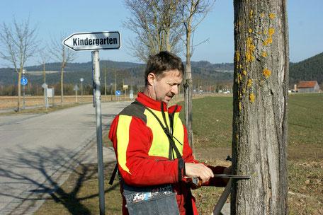 Baumkartierung Aufnahme