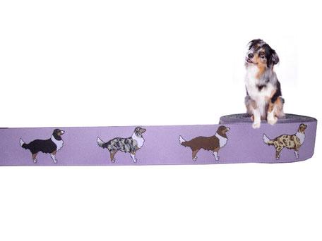 Australian Shepherd Borte Webband Hund