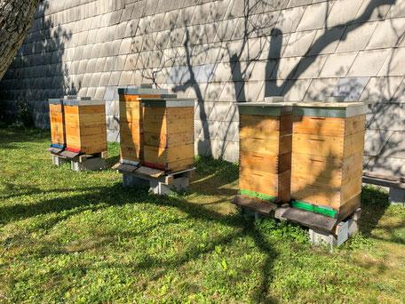 Imkerei HEINRICH - Bienenstand Perchtoldsdorf