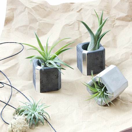 Concrete Silver Cube Air Plant Holder Set by PASiNGA