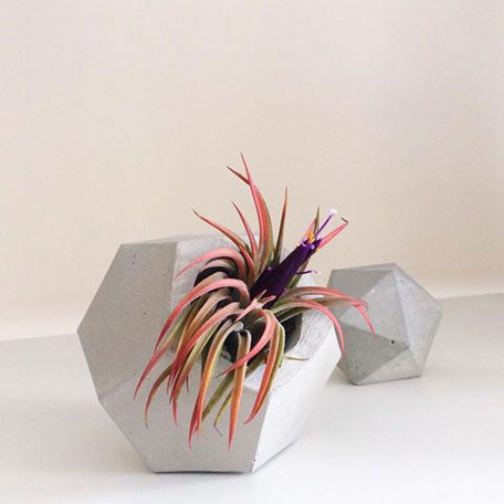 Air Plant Rubra in a Concrete Dodecahedron Vessel by PASiNGA