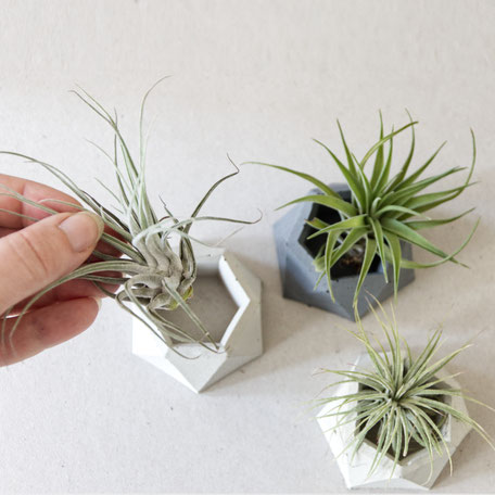 Twisted Hexagon Concrete Air Plant Holder Trio by PASiNGA design