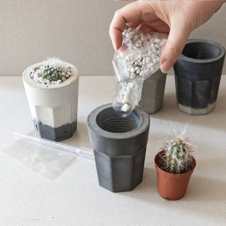 Planting the PASiNGA concrete coffee glass with rocks a small cactus