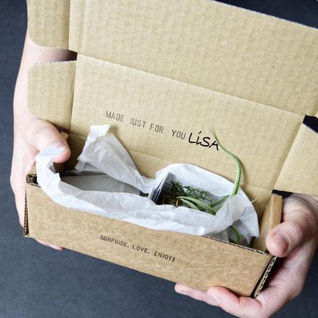 Concrete Air Plant Rock PASiNGA Personalised Gift Box