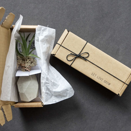Let Love Grow Concrete Air Plant Rock PASiNGA Gift Box
