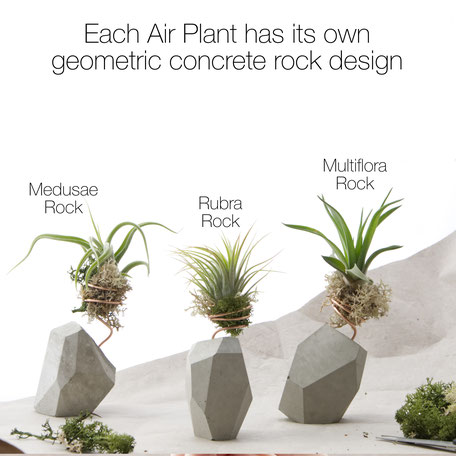 Personalised Gift Box With Geometric Concrete Air Plant Rock by PASiNGA