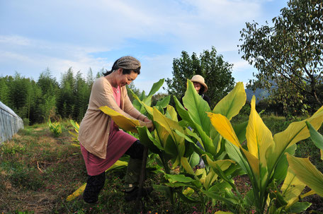ハーブ農電で収穫体験。神奈川のアロマテラピー講座