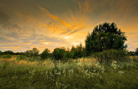 Landschaftsfotografie, Dessau, Elbaue