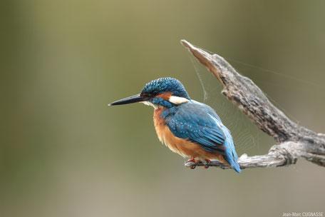 Pierre Rigou, LPO Tarn, réserve ornithologique, réserve naturelle régionale à Saix et Cambounet-sur-le-Sor, oiseaux