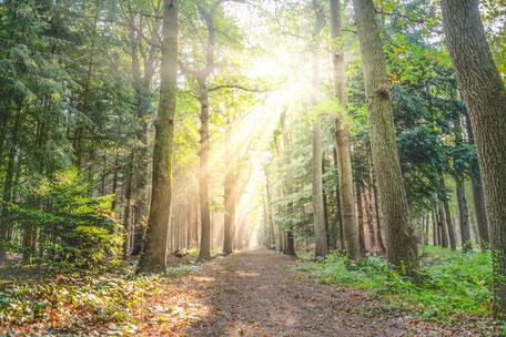Balade en forêt à Escoussens en Montagne Noire