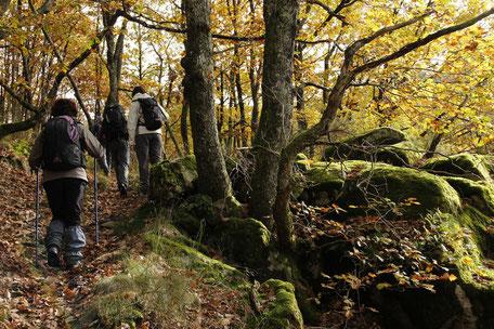 Balade en forêt à Escoussens en Montagne Noire, Mouscaillou, que faire à Puylaurens, que faire à Dourgne