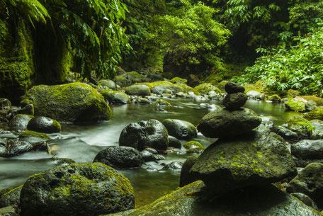 Balade en forêt à Escoussens en Montagne Noire aux Cascades du Mouscaillou