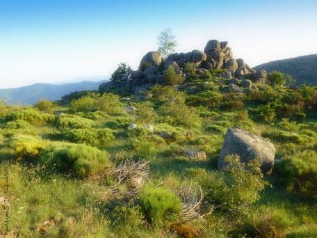 Paysage typique du Mont-Lozère. Granites et landes. Mont-Lozère2012C©NadineVILAS