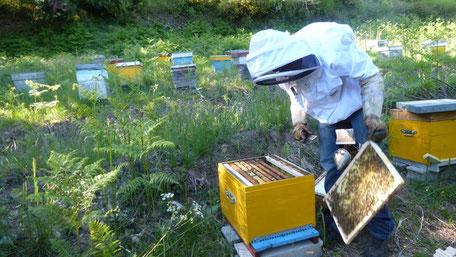 Bastien au rucher