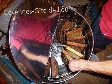 Extraction du miel à l'aide d'une centrifugeuse