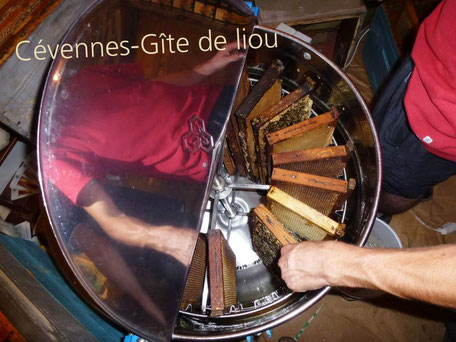 Extraction du miel des Cévennes à l'aide d'une centrifugeuse
