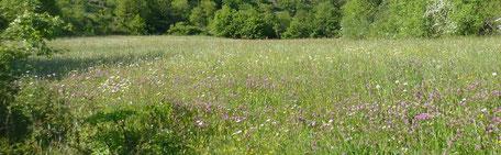 Une prairie des Causses de Lozère au printemps