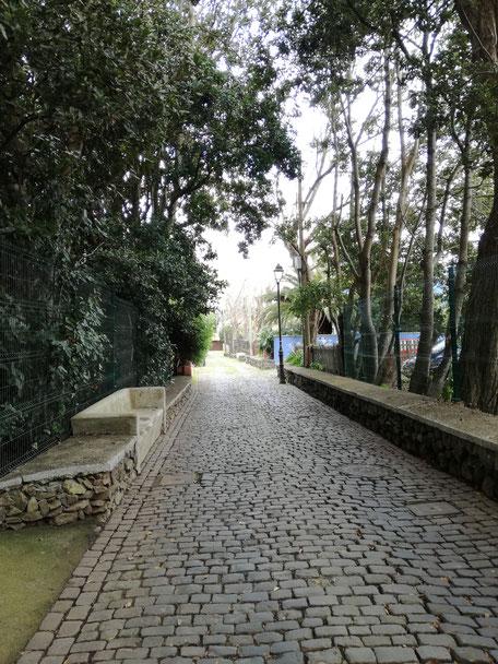 Camino de los Tiles / Paseo de las Acacias, Guamasa, La Laguna.